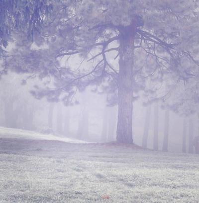 Misty Wood 3 by moonchild-lj-stock