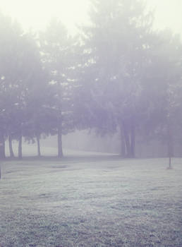 Misty Wood 4