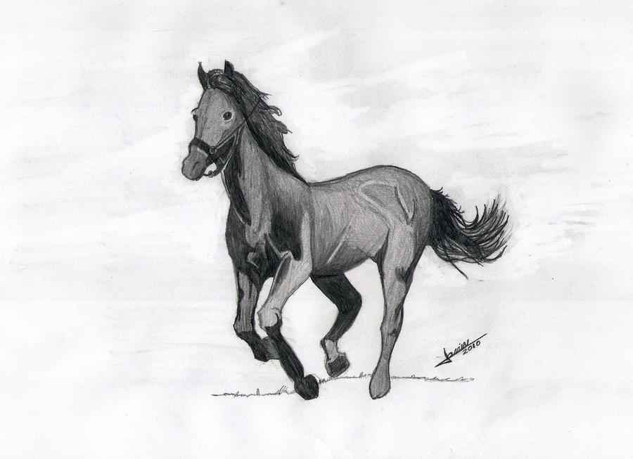 images of horses in black and white - photo #2