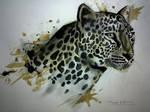 Cheetah eyes