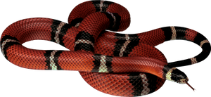 Snake PNG image picture download free by Alwa3d