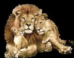 Lion PNG image, free image download