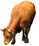 Clipartcow1