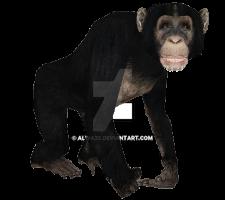 Chimpanzee by Alwa3d