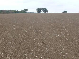 Bare Field 3