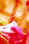 Abstract from flower