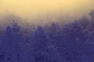 misty morning. by SpellboundMisfits