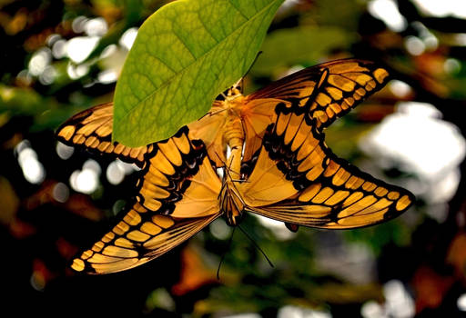 more butterfly love