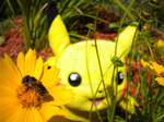 Pikachu's Real Combee Friend