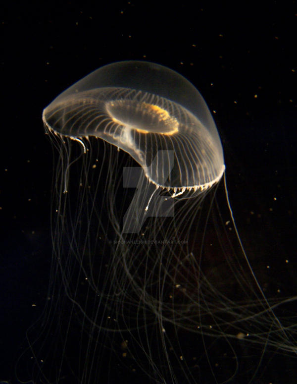 crystal jelly fish by siobhanleigh