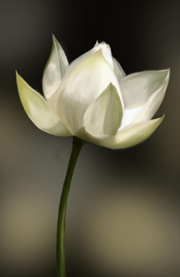 white lotus  sp by aunjuli on deviantart, Natural flower