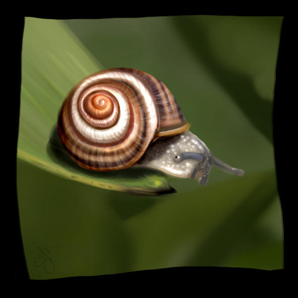 Mr. Snail - SP22 by aunjuli