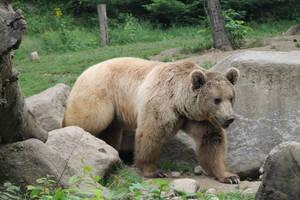 Bear 3 by Linay-stock