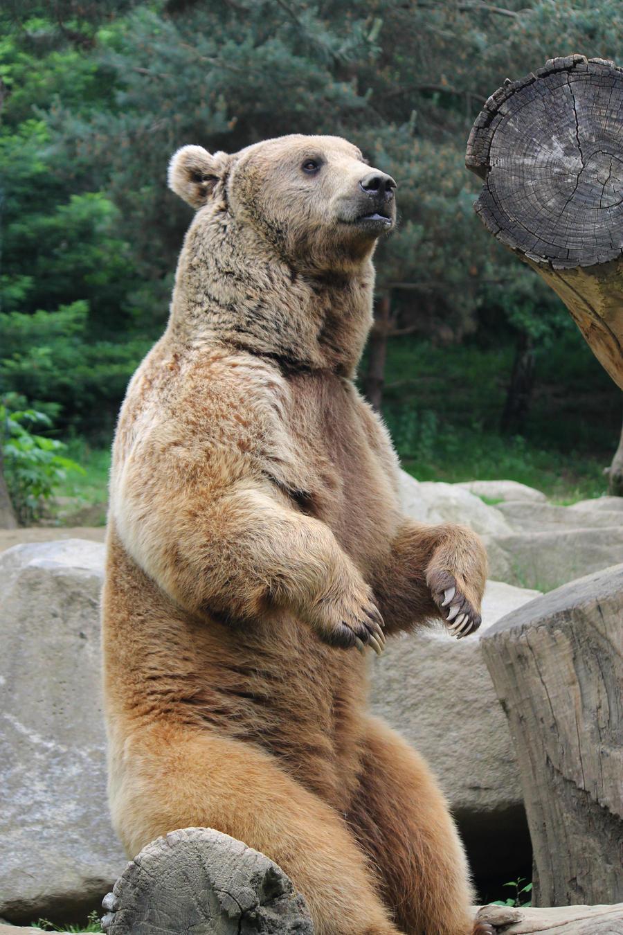 Bear 7 by Linay-stock
