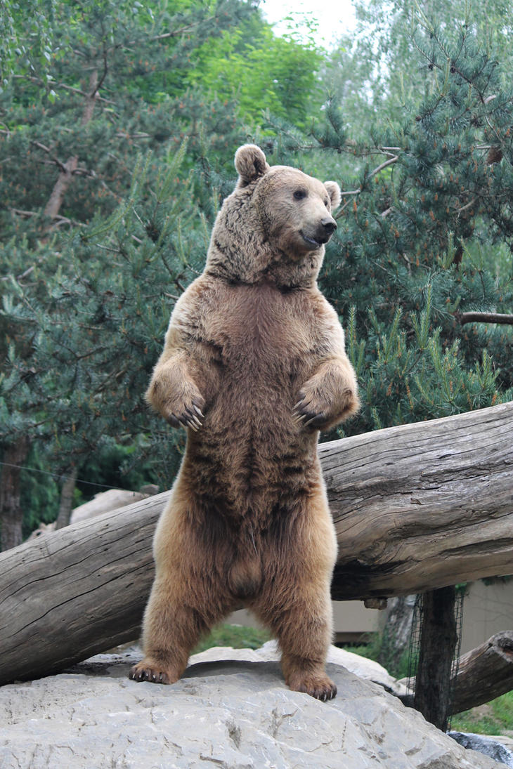 Bear 10 by Linay-stock