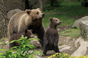 Bear Family 2 by Linay-stock