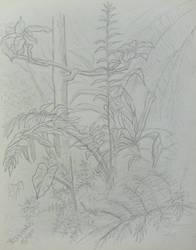 Sketch at the Botanical Garden I