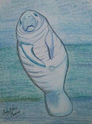 Manatee by ladylithia