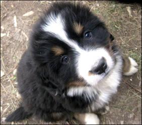 Puppy from Le Clos de la Cigaliere