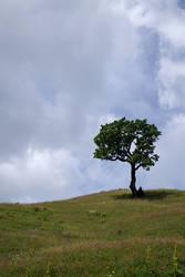 Tree Time by Melanie-Melaka