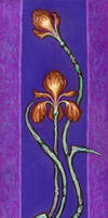 Iris by Gravitzappa