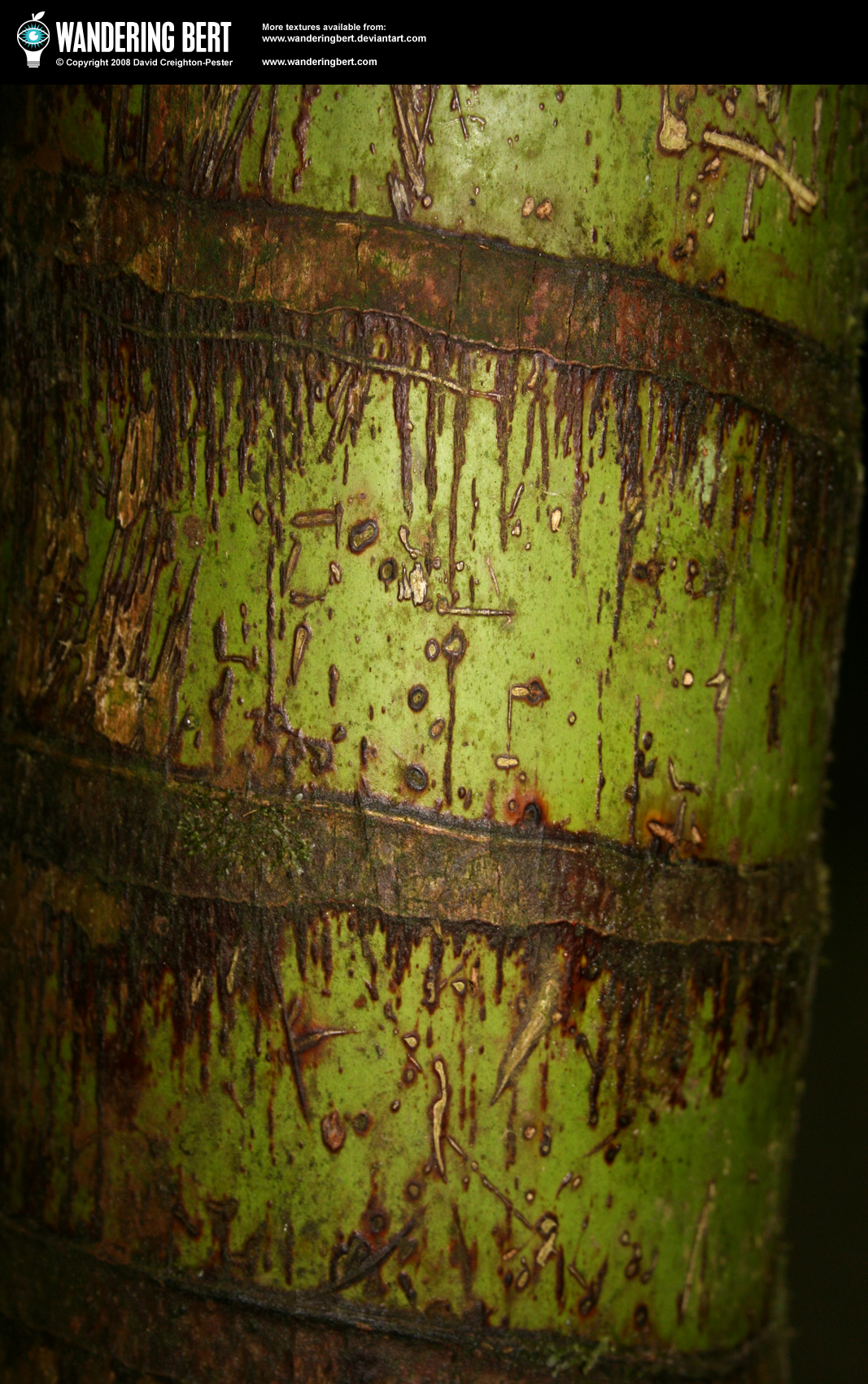 Wood - Bamboo by WanderingBert