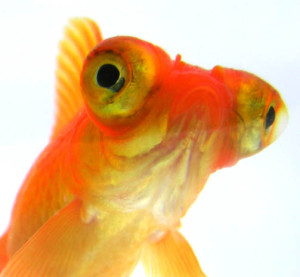 electric-goldfish's Profile Picture