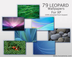 79 Leopard Wallpaper for XP by nobodyuse