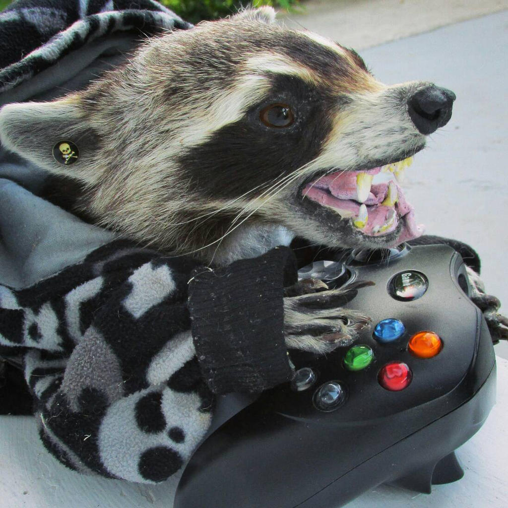 taxidermy gamer raccoon by kazscreations on deviantart