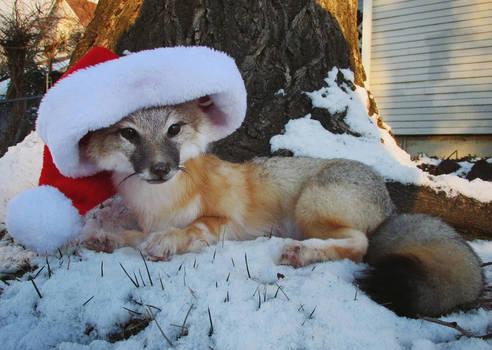 Swift Fox Softmount - Petite