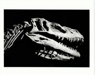 Yangchuanosaurus Fossil by burpingcat