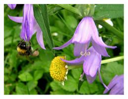 bumble-bee by kallerhult