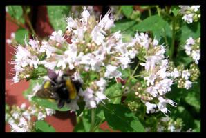 bumble-bee 2 by kallerhult