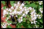 bumble-bee 2