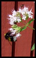 bumble-bee 4 by kallerhult