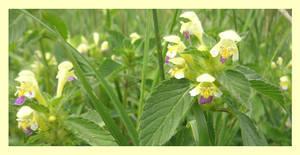pretty little flowers by kallerhult
