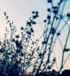 Wish by Anyneva