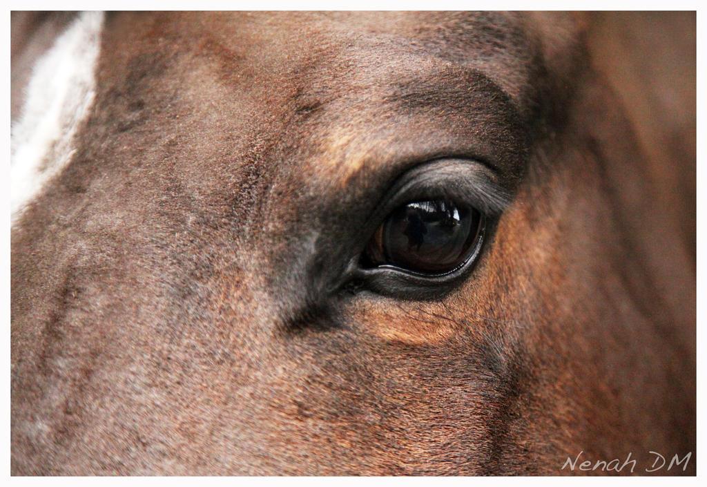 Horse Eyes Painting Horse Eye by Xtitanic