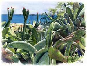 Cactus, watercolour