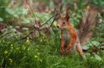 Squirrel by MariaBabintseva