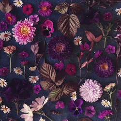 Violet autumn