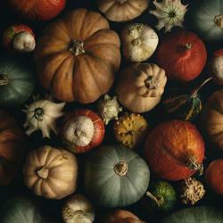 Pumpkin by MariaBabintseva