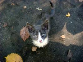 Little kitten by AlphaPrimeDX