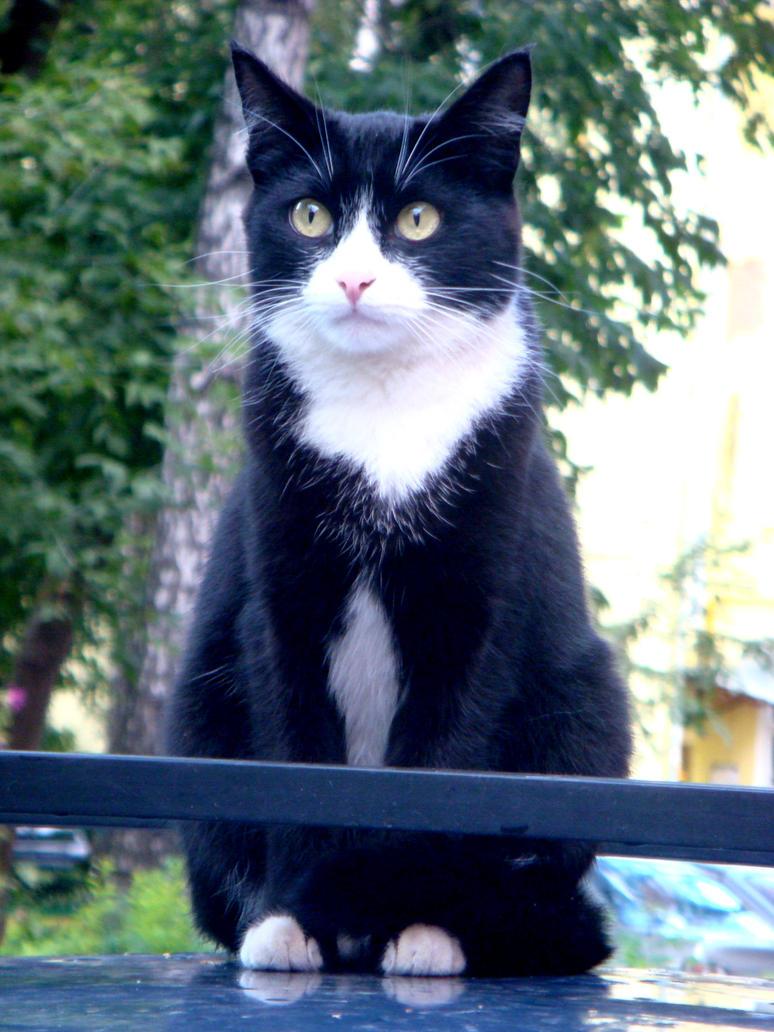 Cat 3 by AlphaPrimeDX