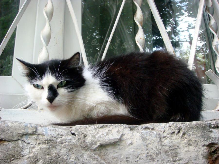 Cat 4 by AlphaPrimeDX