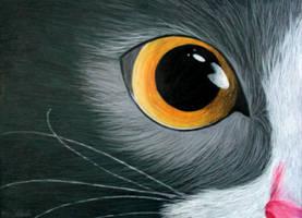Yellow cat eye by KarolinaJakubowska