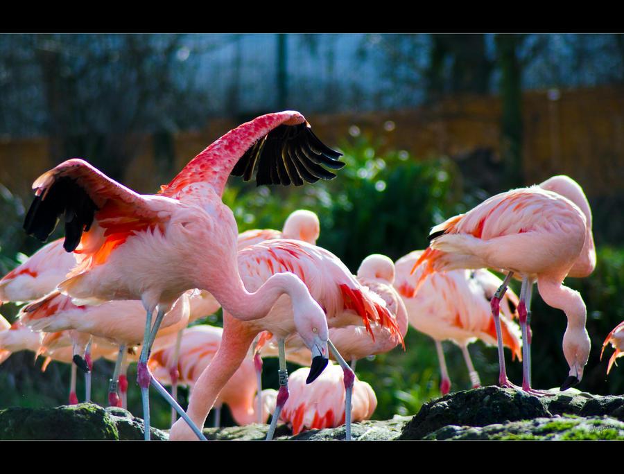 Pink by Wayman