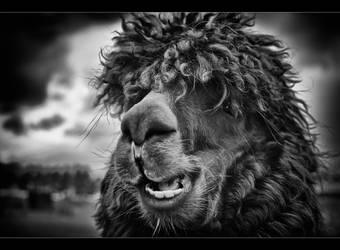 The Llama King - Mono by Wayman