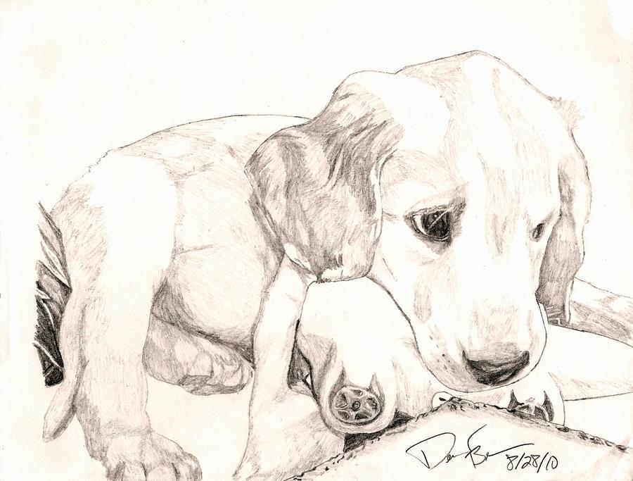 My dog by Cherypoptart