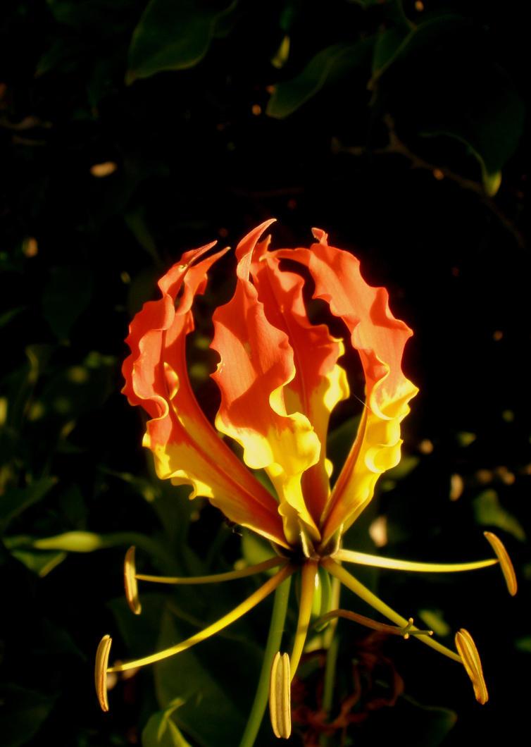 Sunburn by Aliswan